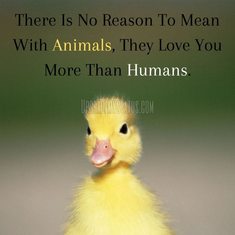 image of a yellow chicken and quotes about animal's love written on it.
